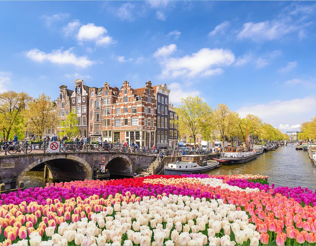 Amsterdam, Tulipaner, Nederland